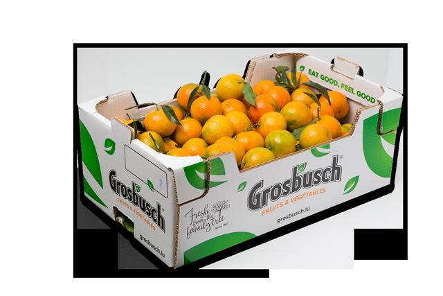 Clementines Feuilles Grosbusch